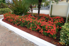 This is a 12-acre Commercial property in Florida. Blue Gold™ enabled the Condo development to reduce its massive budget for fertilizer, and achieve even more blooms using Blue Gold™ Vibrant Floral. This is a shot of Blue Gold™ florals. Blue Gold™ does impressive things for promoting massive blooms.