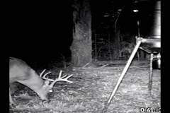 (1/5) A Blue Gold™ Deer Dump customer used our Rackimizer liquid deer attractant at 8 PM.