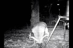 (5/5) Get those huge bucks with Blue Gold™ Deer Dump Rackimizer!