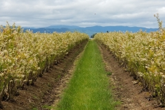 (1/2) Pictured: Townsend Farms (Oregon's largest blueberry grower).