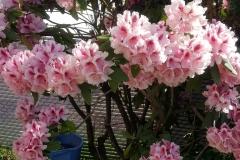 """My beautiful Blue Gold™ spring florals!"" -David Knaus"