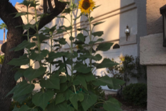 """""""I use this in Las Vegas, and it is helping my garden immensely!!"""" -Jacqueline Sanchez"""