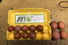 (1/5) Local farmer and friend, John Hubbard started using the Grand Champion Poultry solution on his chickens. John kept telling us since he started using the Grand Champion that he cannot shut the egg cartons because the eggs are too big and the shells are way harder! He brought some to us this morning at the Eden Lab, and we weighed them in. Our Warehouse Manager and Head Mixer said when he buys eggs at the store they usually rattle around in the carton since they are generally smaller than the carton. Out of the dozen eggs, John brought us; only one would rattle around. The rest were extremely tight, and four would not let the lid shut at all! This is a 'Happy Egg' Organic Egg Carton from the grocery store. Next time you're in the grocery store, open the carton and compare the eggs inside to the Grand Champion eggs below. The four eggs to the left would not let the carton shut. The rest except one are very tight in their holders.