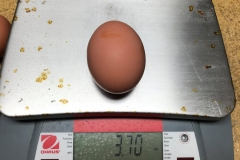(2/5) The biggest egg weighed 3.70 ounces.