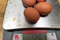 (3/5) The four biggest eggs that would not let the carton shut weighed 11.40 ounces.