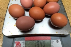 (4/5) The eight other eggs that fit tight in the carton weighed 18.40 ounces.