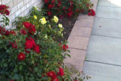 "(1/3) ""Incredible!! I purchased this product a month ago after reading the reviews and decided to take a chance. I did a soil soak on each of my 15 roses and left town for three weeks, praying hubby would give them enough water so they wouldn't die in our 90-degree heat before my return."