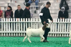 Cullen with his Grand Champion™ show goat!