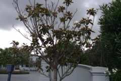 (2/3) They have had trouble for years to get it to grow, bloom, and even produce leaves.
