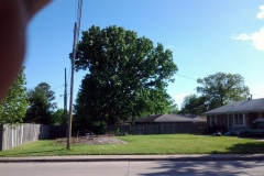 (3/4) This Oak Tree was near death and was slated for removal. After treating the bottom six feet of trunk with Blue Gold™, this oak tree quickly came back to life.