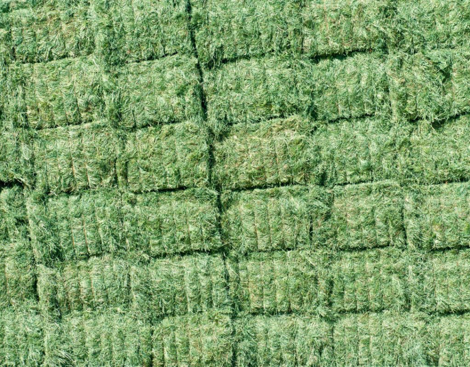 alfalfa, alfalfa sprouts, alfalfa hay, alfalfa seed, alfalfa pellets, alfalfa plant, alfalfa cubes, alfalfa grass, alfalfa field, alfalfa bales, alfalfa farm